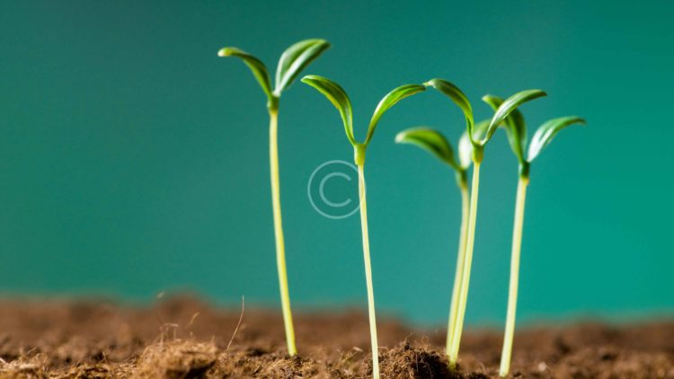 bigstock-Green-seedling-illustrating-co-14319230-1.jpg