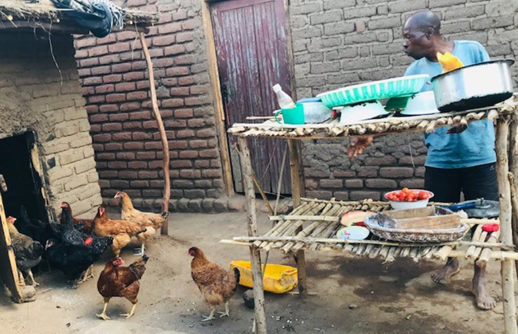 Kuroiler chickens are part of the family in this rural homestead in Chiradzulu District. Photo: Sabine Homann-Kee Tui, ICRISAT