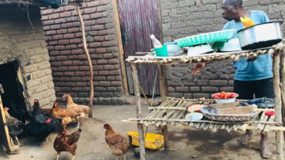 Business meets nutrition as Kuroiler chickens find a place in smallholder farms in Malawi