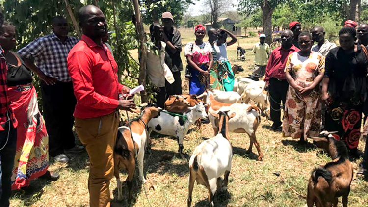 Auctions in markets herald higher incomes for Malawi's crop-livestock farmers