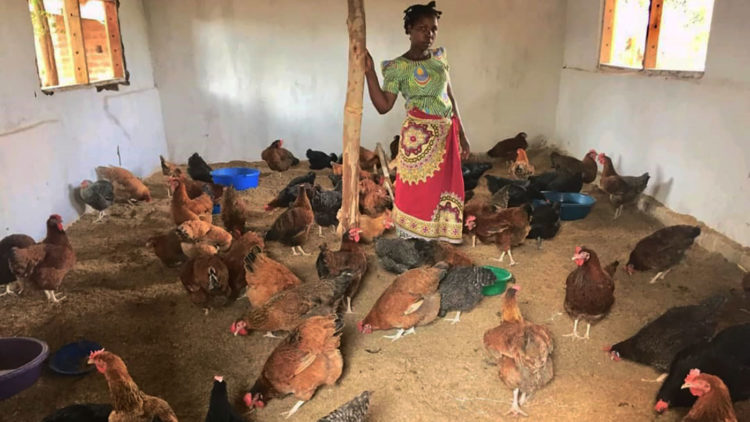 A tale of 'chicken and egg': Malawi farmers reduce poultry feed cost by 80%, increase egg production by 200%